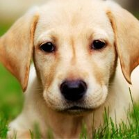 nutritional content of commercial dog foods