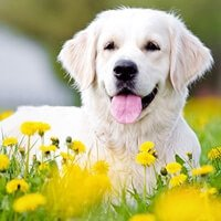 how to keep your dog happy with organic dog food