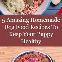 5 Amazing Homemade Dog Food Recipes