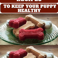 4 Simple Frozen Dog Treats Recipes to Keep Your Puppy Healthy
