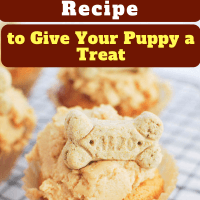 11 Healthy Easy Dog Cupcakes Recipe to Give Your Puppy a Treat