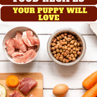 4 Diy Healthy Homemade Dog Food Recipes Your Puppy Will Love