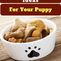 Easy Homemade Dog Treats Recipes Ideas For Your Puppy