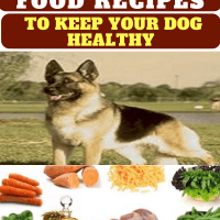 German Shepherd Dog Food Recipes