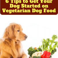 Vegan Dog Food, 6 Tips to Get Your Dog Started on Vegetarian Dog Food