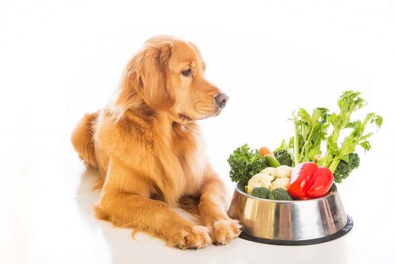 6 tips to get your dog startted on vegetarian dog food